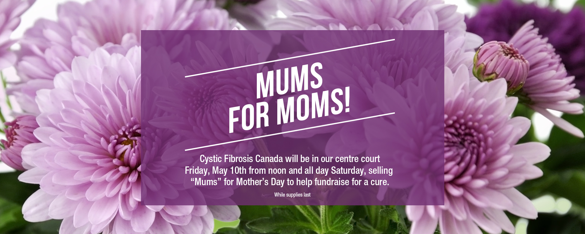 mums for moms
